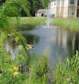6-2010, P.2, Clean pond
